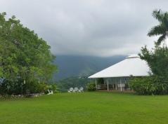 Jamaica Rain